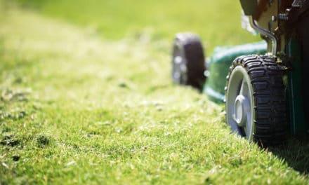Tonte de la pelouse : nos conseils