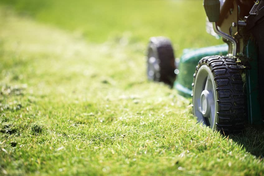 bien tondre sa pelouse