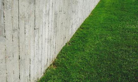 L'entretien de la pelouse : comment s'y prendre ?