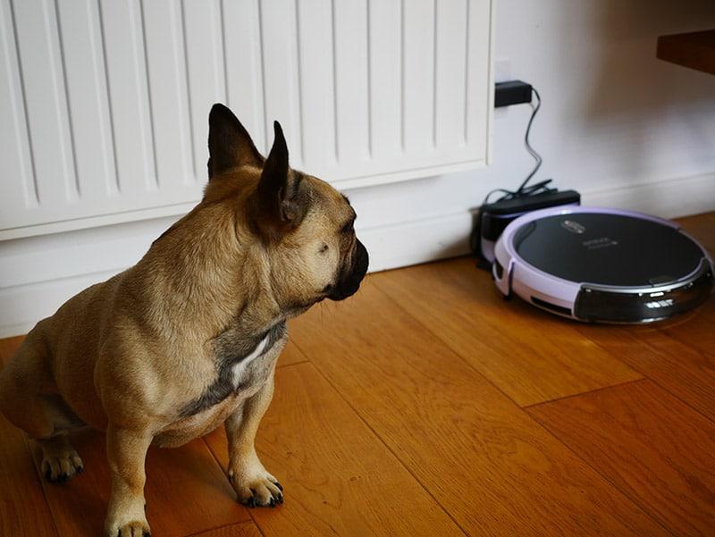 amibot animal h2o chien